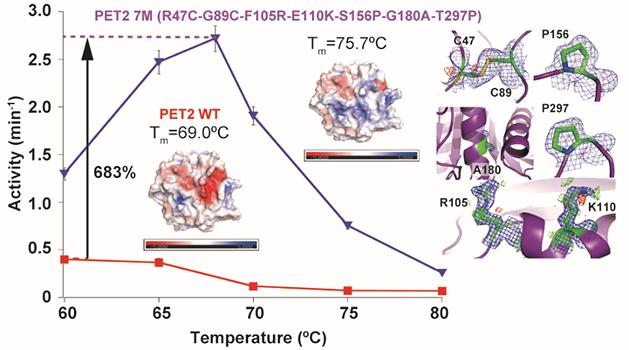 プラスチック分解酵素の熱安定性と活性を向上させ、熱安定性向上の構造的基盤と活性向上の機構を解明(飯野亮太教授、古賀信康准教授ら)