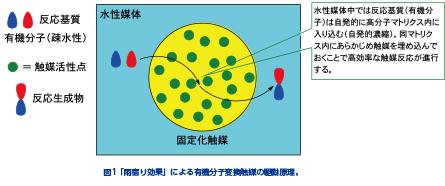 両親媒性高分子担持触媒の創製:「雨宿り効果」による水中での反応駆動(魚住泰広教授)(レターズ84より)